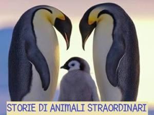 artemista_animali