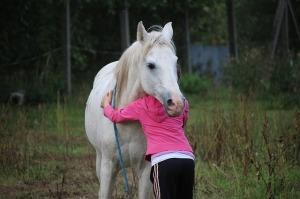 horse-958320_640